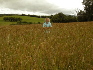 Alan standing in a field of Wheat Reed