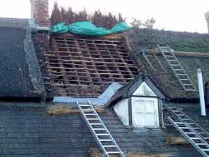 Stripping off the thatch