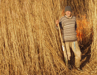 Alan in the reed beds at Newport Pembrokeshire.