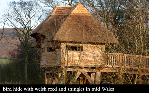 Thatched Bird hide in Brecon, Mid Wales.